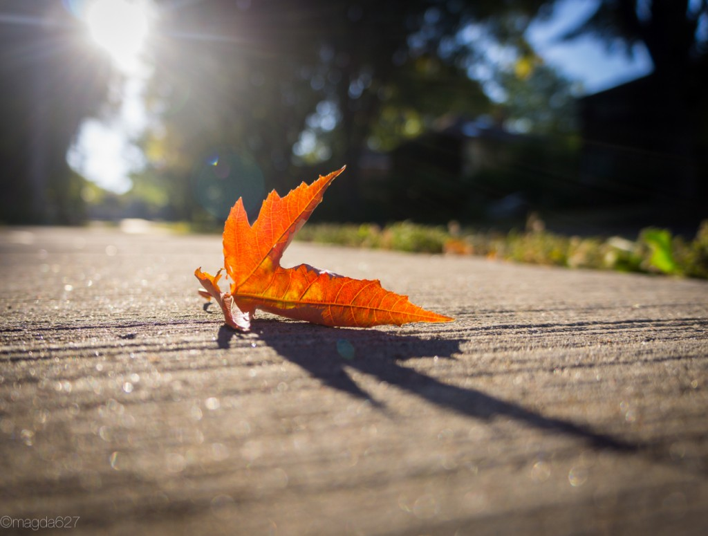 anteketborka.com, fall-11