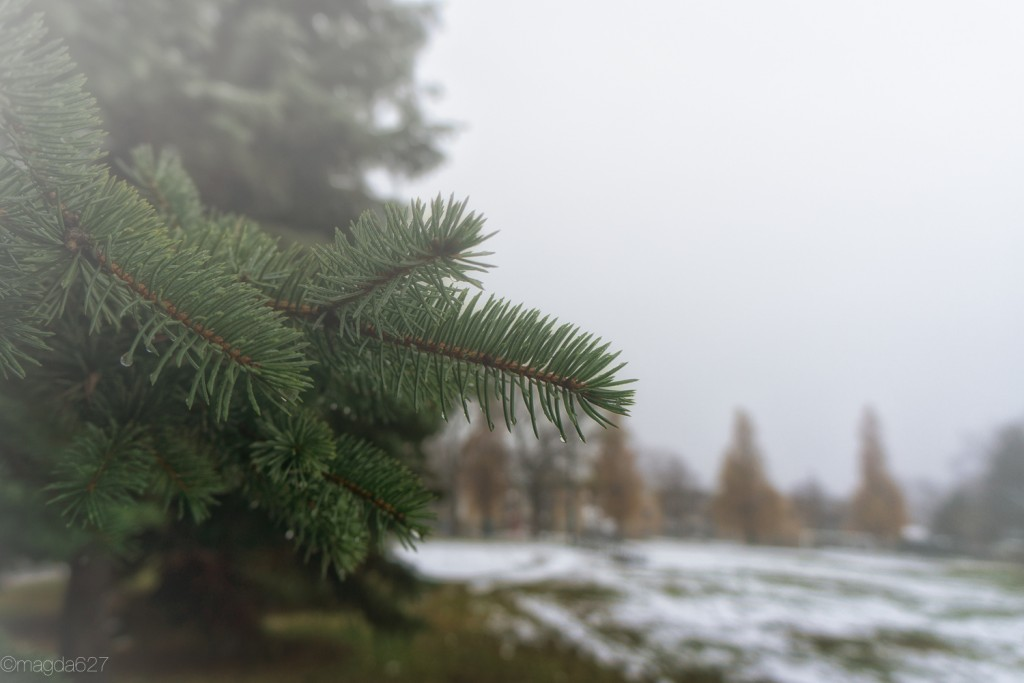 anteketborka.com, foggy_day-5