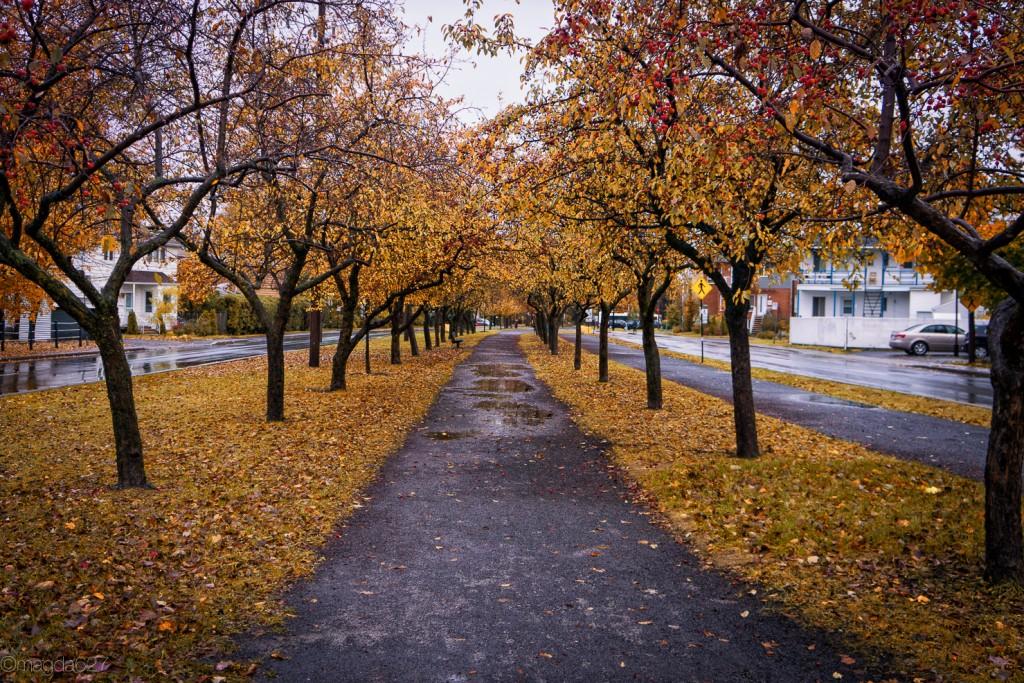 anteketborka.com, novembre_piste_cyclable-8