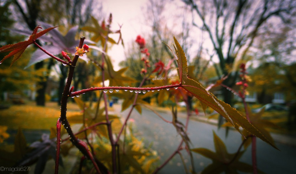 anteketborka.com, photodudimanche 5_11_16-1