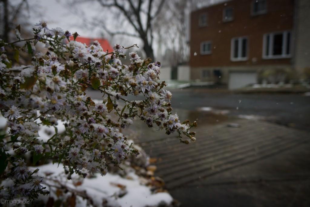 anteketborka.com, first_snow-13