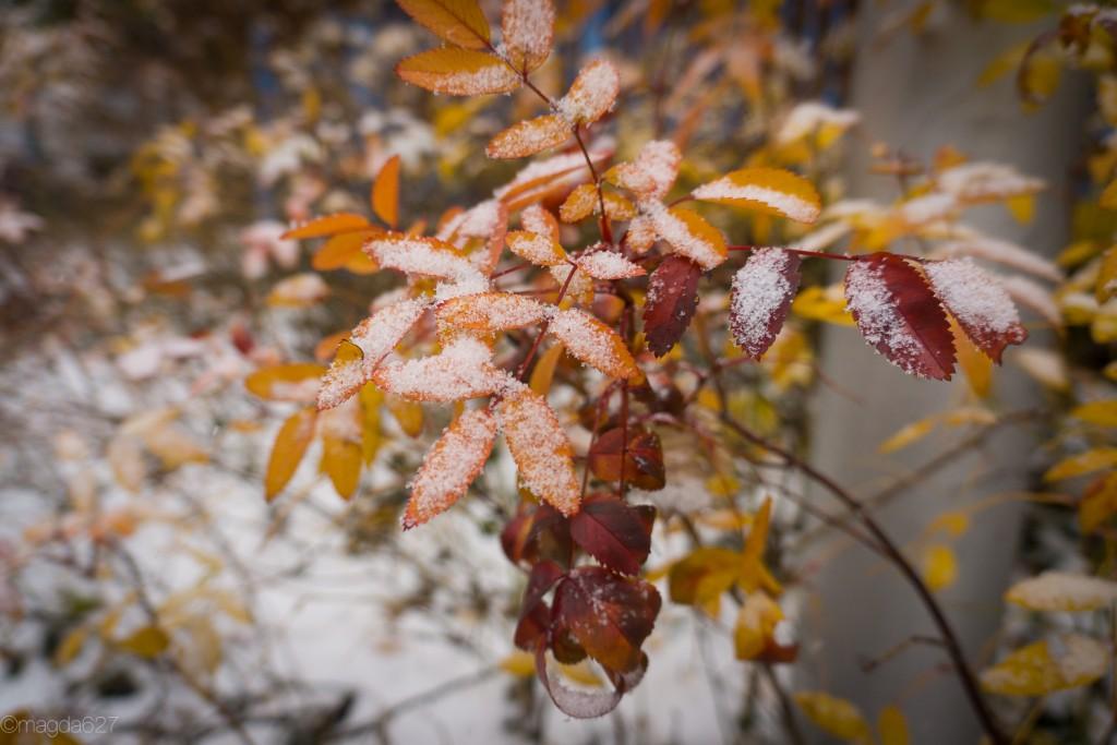 anteketborka.com, first_snow-15