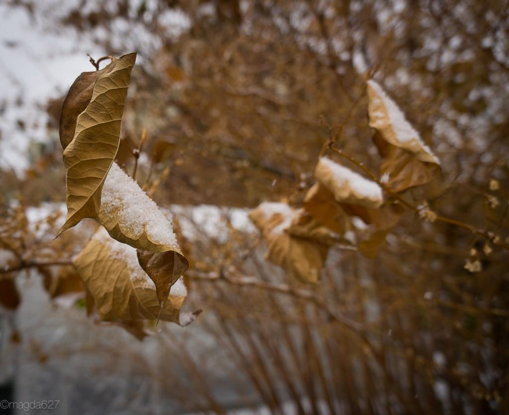 anteketborka.com, first_snow-16