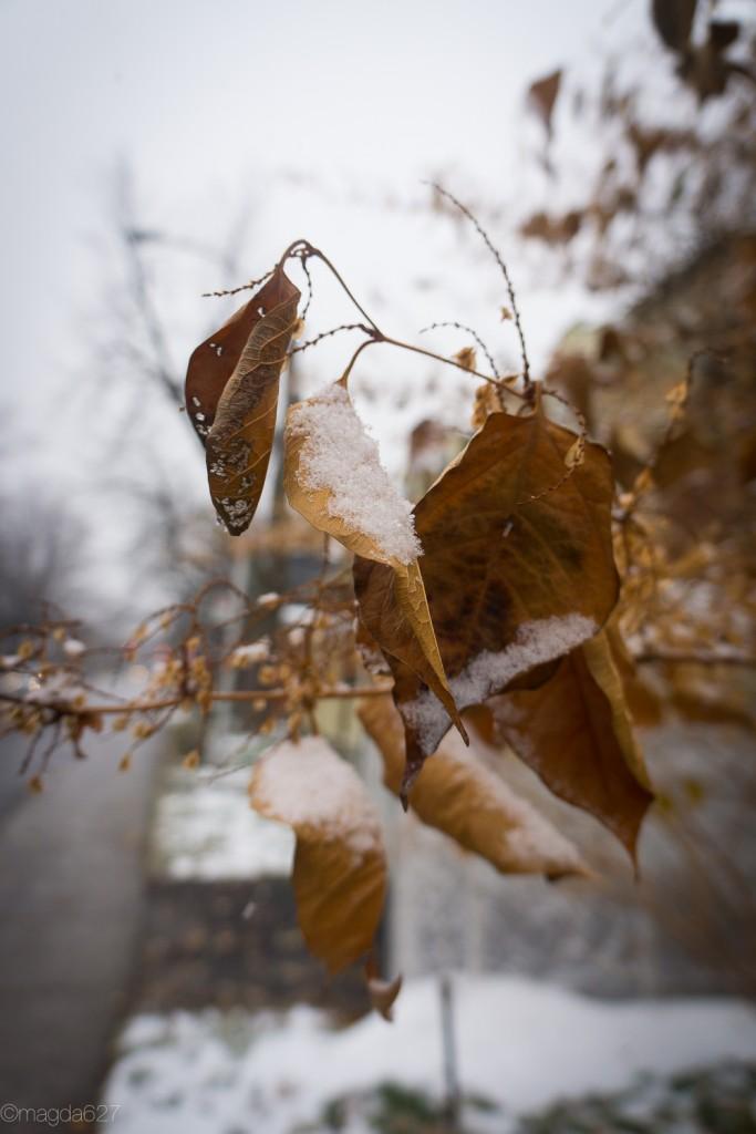 anteketborka.com, first_snow-17