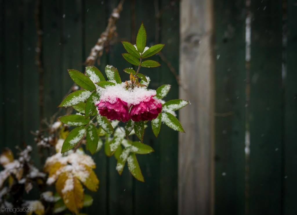 anteketborka.com, first_snow-23