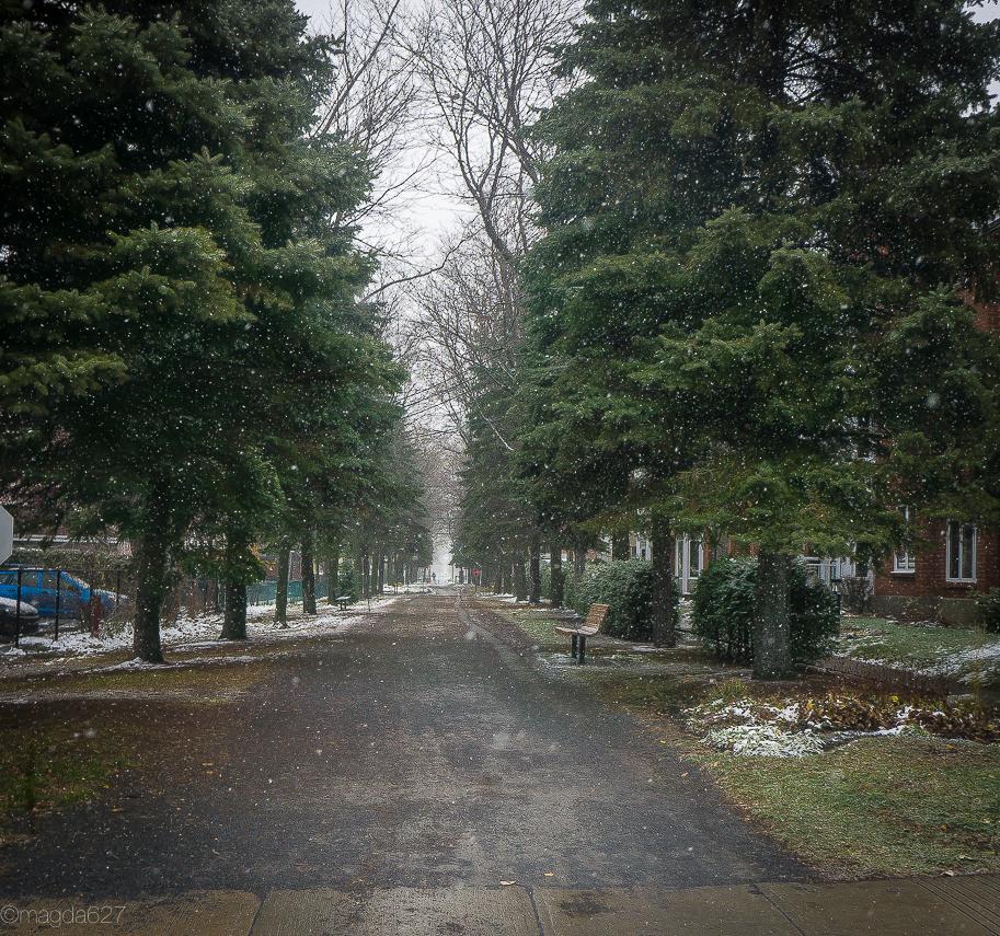 anteketborka.com, first_snow-6
