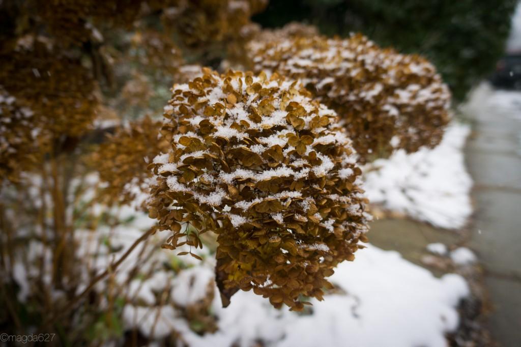 anteketborka.com, first_snow-9