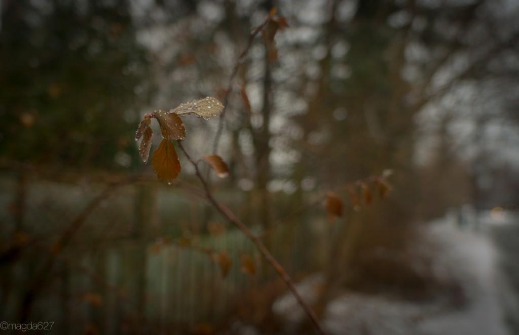 anteketborka.com, hiver-22-2