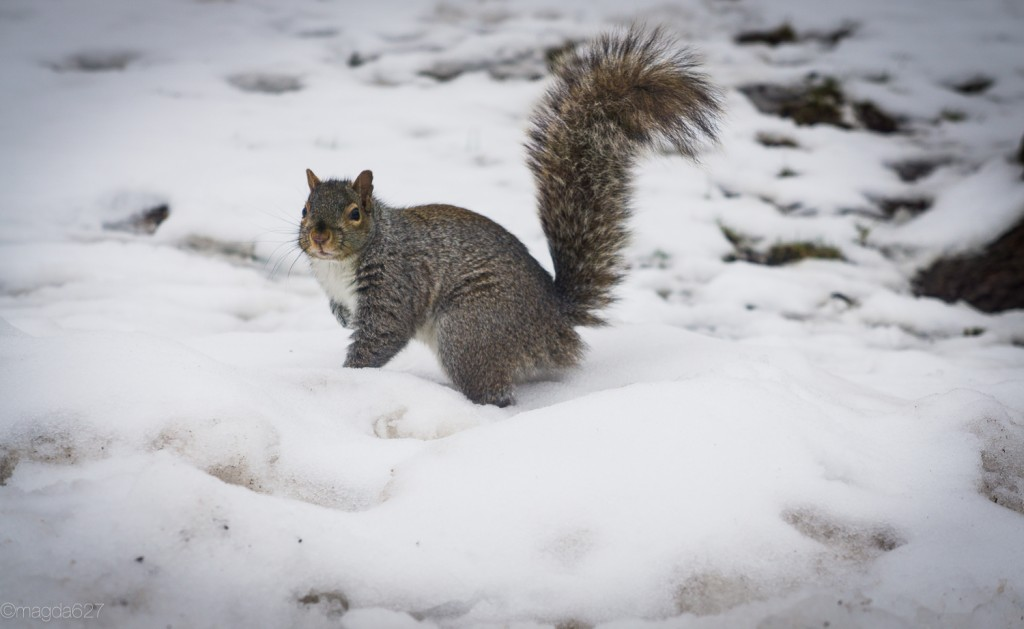 anteketborka.com, hiver 29_01_17-8