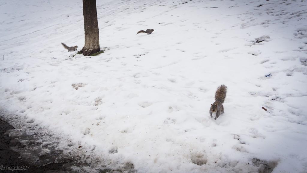 anteketborka.com, hiver 29_01_17-9