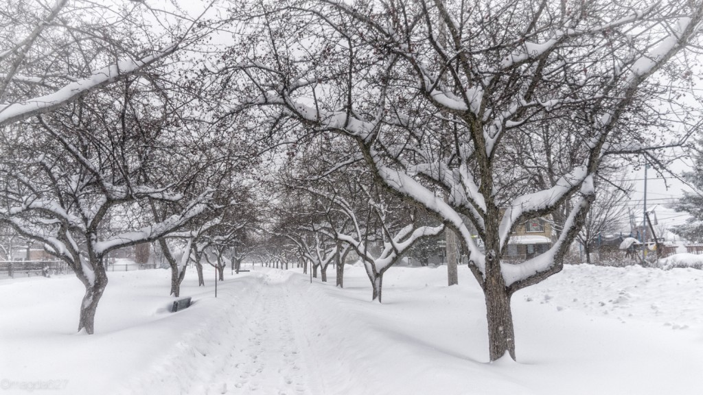 anteketborka.com, neige 02_17-4-2
