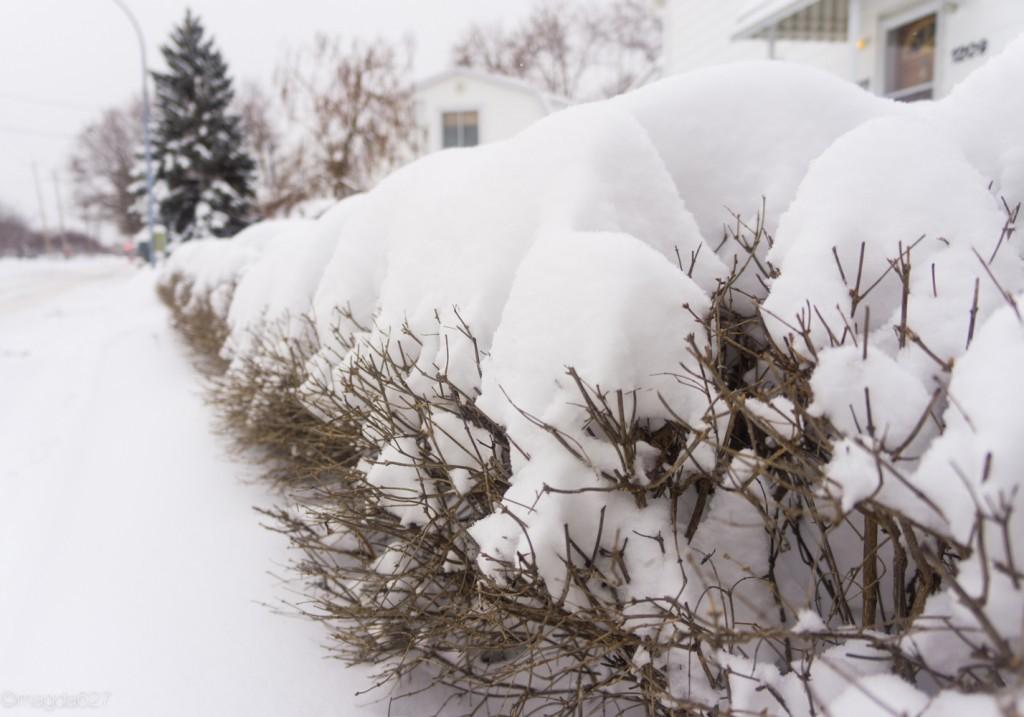 anteketborka.com, neige 02_17-4-3