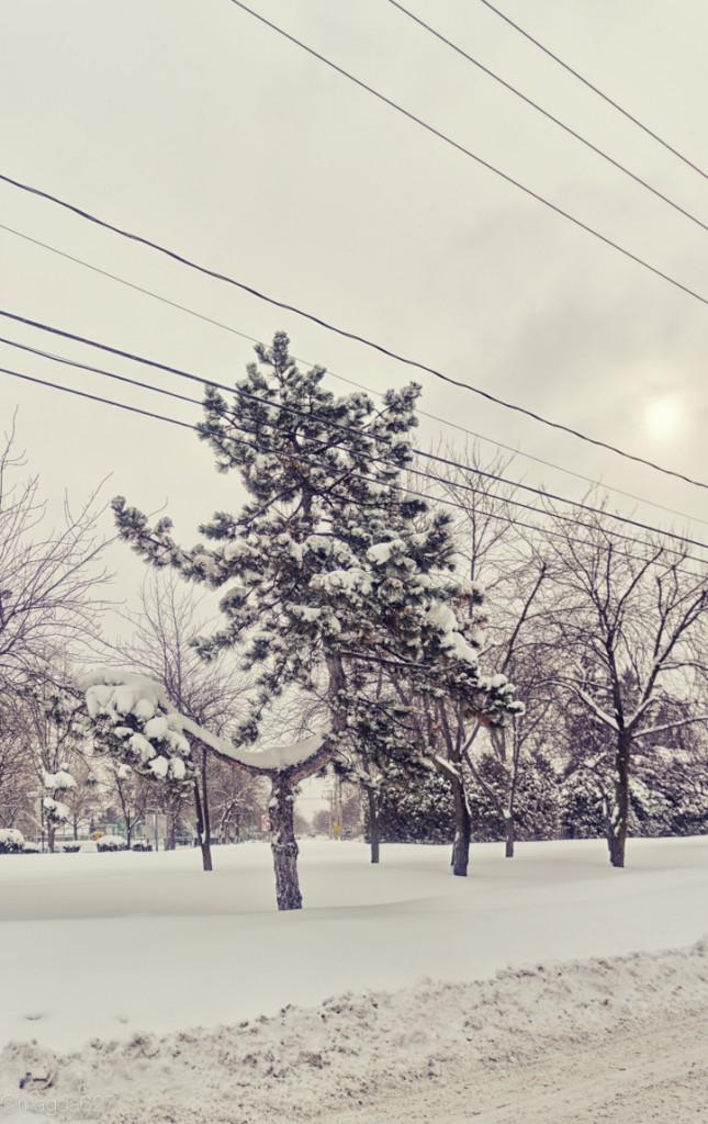 anteketborka.com, neige 02_17-5-3