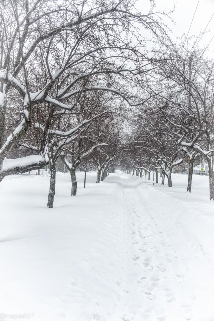 anteketborka.com, neige 02_17-7-2