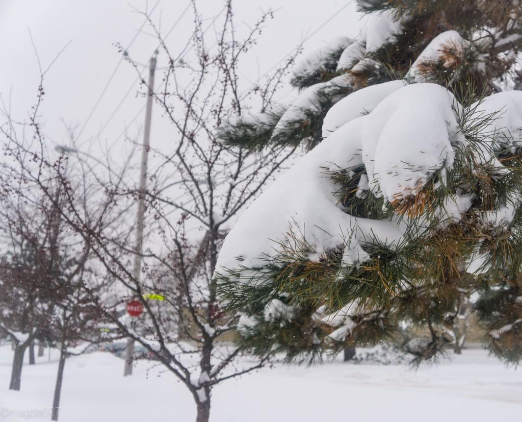 anteketborka.com, neige 02_17-8-2