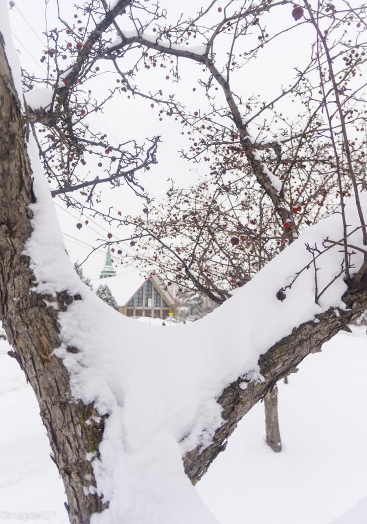 anteketborka.com, neige 02_17-9-2